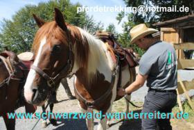 Foto 2 Wanderreiten für Erwachsene - Pferdetrekking - Reiturlaub im Schwarzwald