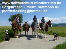 Foto 6 Wanderreiten Todtmoos Au - Reiten für Outdoor-Fans