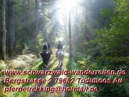 Wanderreiten, Freizeitreiten, Tagestouren nicht nur für Frauen. 40 Min. ab Basel in Todtmoos Au