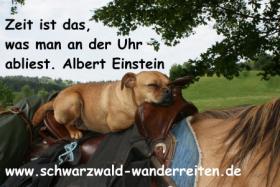 Foto 4 Wanderreiten, Pferdetrekking ab Todtmoos Au auch als Geschenkidee