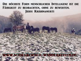 Foto 5 Wanderreiten, Pferdetrekking ab Todtmoos Au auch als Geschenkidee