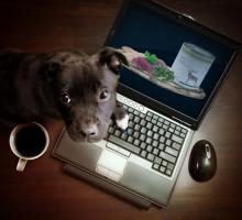 Foto 3 Warum seinen Hund nicht mit Reico Vital ernähren!?