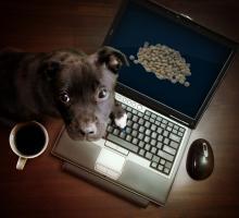 Foto 13 Warum seinen Hund nicht mit Reico Vital ernähren!?
