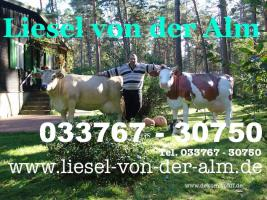 Foto 6 Was DU hast NOCH KEINE HolsteinKuh im Garten ...