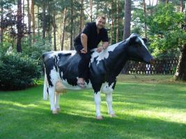 Was den du hast die neue Holstein Deko Kuh lebensgross schon gesehen und jetzt möchtest Du Sie auch gern erwerben ja dann greif zum Telefon 033767 30750