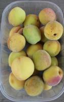 Weinbergpfirsich Früchte aus eigener natürlicher Ernte
