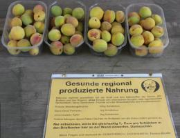 Foto 3 Weinbergpfirsich Früchte aus eigener natürlicher Ernte