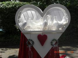 Hochzeit tauben freiburg