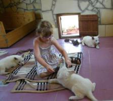 Foto 3 Weiße Schäferhund-Welpen mit Stammb. aus gepr. dt. 5-Sterne-Zucht