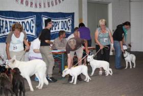 Foto 6 Weiße Schäferhund-Welpen mit Stammb. aus gepr. dt. 5-Sterne-Zucht