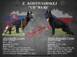 Welpen Deutsch Schäferhund zu verkaufen
