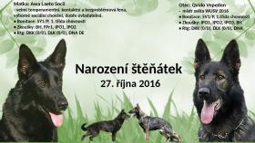 Welpen Deutscher Schäferhund mit ausgezeichnetem Stammbaum
