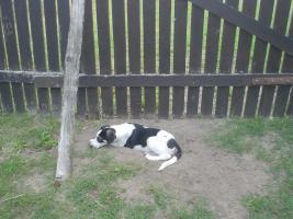 Foto 3 Welpen, Hundekinder