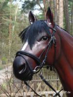 Foto 3 Werbefiguren - Deko Horse lebensgross - Dekorationsfiguren oder Deko Huhn oder Deko Pferd oder doch ne Deko Kuh ... ja dann www.dekomitpfiff.de anklicken ...