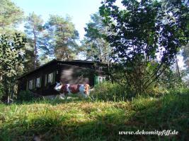 Foto 5 Werbefiguren - Deko Kuh - Deko Horse lebensgross - Dekorationsfiguren oder Deko Huhn oder Deko Pferd oder doch ne Deko Kuh ... ja dann www.dekomitpfiff.de anklicken ...