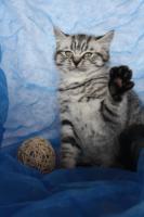 Foto 3 Whiskas-Katzen Dream-Team Mutter und Sohn