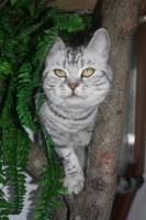 Foto 7 Whiskas-Katzen Dream-Team Mutter und Sohn