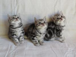 Whiskas Katzenkinder zu verkaufen!
