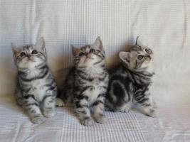 Foto 3 Whiskas Katzenkinder zu verkaufen!