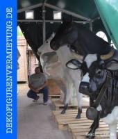 Foto 3 Willste ne deko melk kuh mieten oder ...