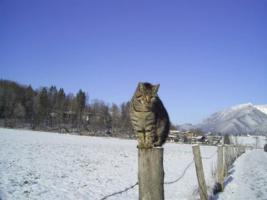 Foto 14 Winterurlaub im Berchtesgadener Land, Ferienwohnungen in Schönau am Königssee, W-LAN