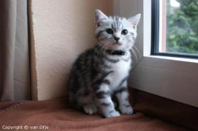 Wir erwarten Kitten