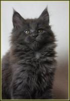 Foto 3 Wir haben Kitten aus liebevoller Hobbyzucht
