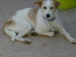 Foto 2 Wir suchen Sachspenden für Hunde in Portugal !!!