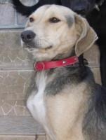 Foto 3 Wir suchen Sachspenden für Hunde in Portugal !!!