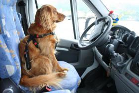 (Wohnmobil) Womo - Foto - Hunde - Blog (Weblog)