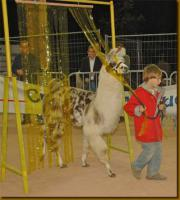Foto 4 Wolly-Lamas