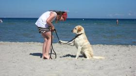 Foto 6 Wunderbare Golden LabradorRetrieverwelpen zu verkaufen