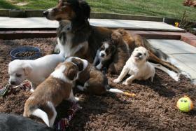 Foto 5 Wunderschöne Bunte Pugglemischlinge!