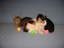 Foto 4 Wunderschöne Katzenkinder suchen ein Zuhause