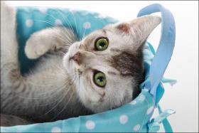 Wundervolle Kätzchen möchten dich glücklich machen :)