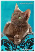 Foto 3 Wundervolle Kätzchen möchten dich glücklich machen :)
