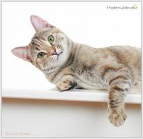 Foto 5 Wundervolle Kätzchen möchten dich glücklich machen :)