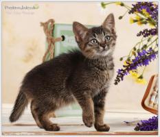 Foto 7 Wundervolle Kätzchen möchten dich glücklich machen :)