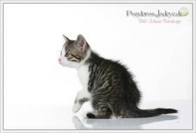 Foto 10 Wundervolle Kätzchen möchten dich glücklich machen :)