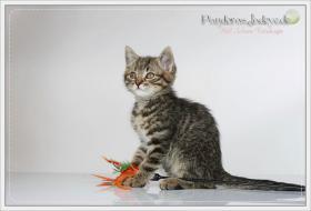 Foto 11 Wundervolle Kätzchen möchten dich glücklich machen :)