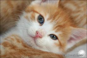 Foto 3 Wundervolle Katzenkinder möchten dich glücklich machen :)