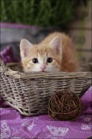 Foto 6 Wundervolle Katzenkinder möchten dich glücklich machen :)