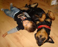 Foto 2 Wurfankündigung *Kinder der Liebe* Rottibabys