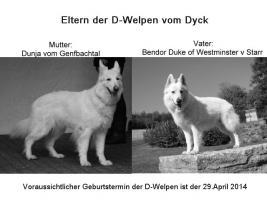 Wurferwartung reinrassige Weiße Schäferhund Welpen mit Papiere