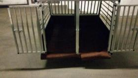 Foto 5 XXL – Doppel Hundetransportbox mit Notausstieg, Ablage und Trennwand