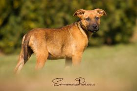 ZECKE - ein bezauberndes Hundemädchen!