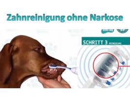 Zahnreinigung für Hunde und Pferde
