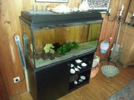 Foto 2 Zu verschenken 200l Aquarium