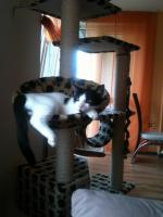 Foto 4 Zwei 2 Jährige Katzen zu verschenken
