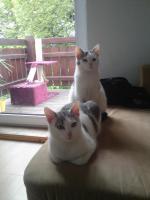 Zwei katzen mädels aus zeitmangel ab zu geben